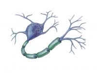 Postępy Neuroimmunologii Klinicznej - Stwardnienie rozsiane i inne choroby demielinizacyjne układu nerwowego
